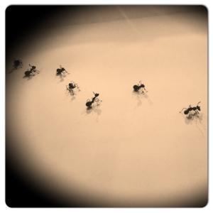 LA PILLA hormigas
